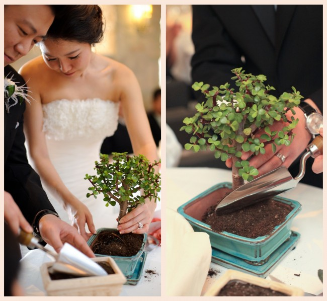 18 Collage Tree Planting Ceremony Preowned Wedding Dresses