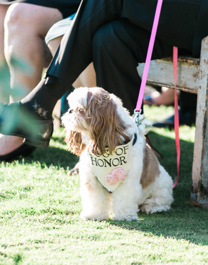 Incorporating Your Pup at Your Wedding | PreOwnedWeddingDresses.com
