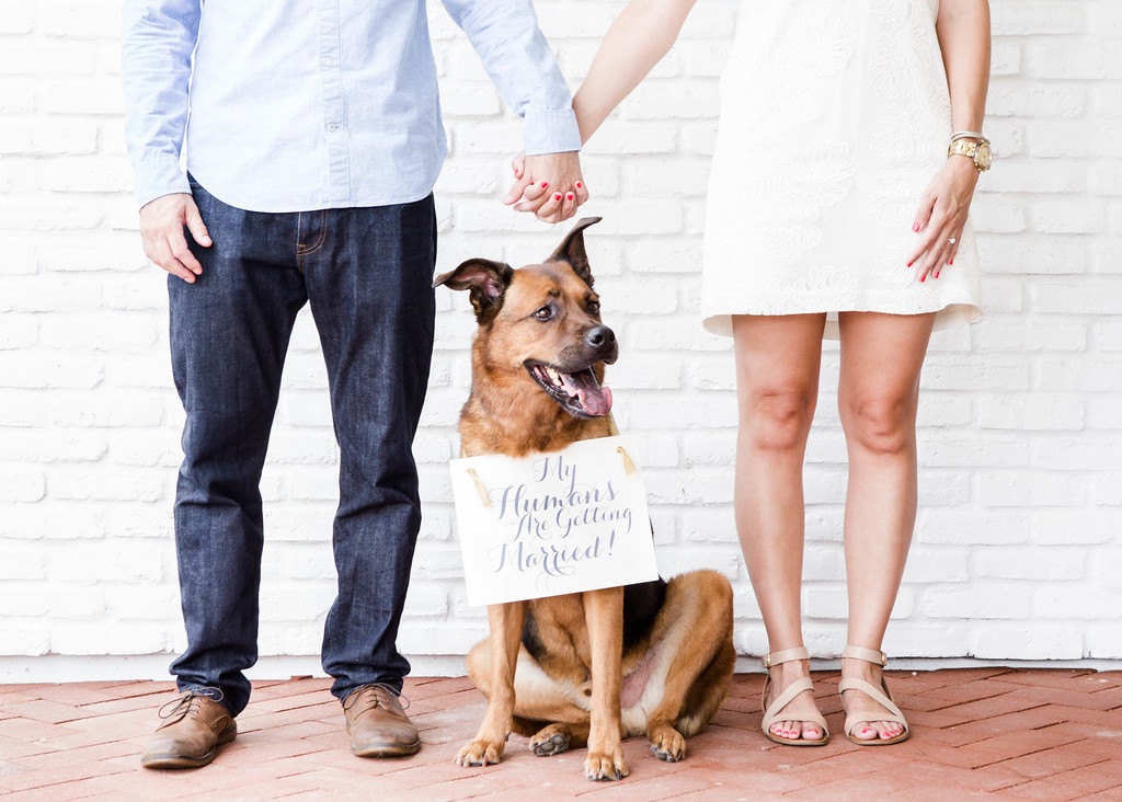 Incorporating Your Pup at Your Wedding | PreOwnedWeddingDresses.